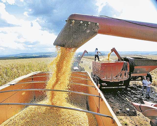Safra mineira de grãos registra queda